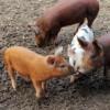 TerraVITA Media Farm Tour: Stop 3, Whitted Bowers Farm