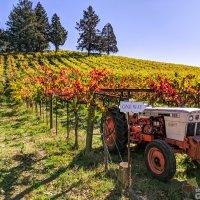 A Winter Wineland Field Guide for Field Blends