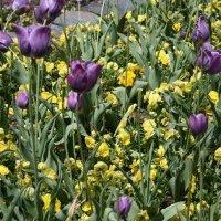 Sarah P. Duke Gardens and Downtown Raleigh