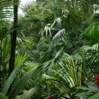 Costa Rica 11.27.09-12.2.09 -- Travelogue