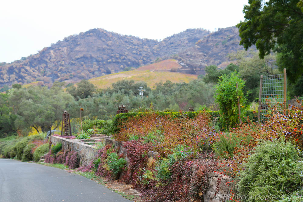Stags' Leap and Etude Wineries: Two Treasury Wine Estate Jewels