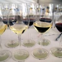 WBC 14: Best Wines