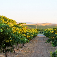 Highlights of the Livermore Valley Wine Country